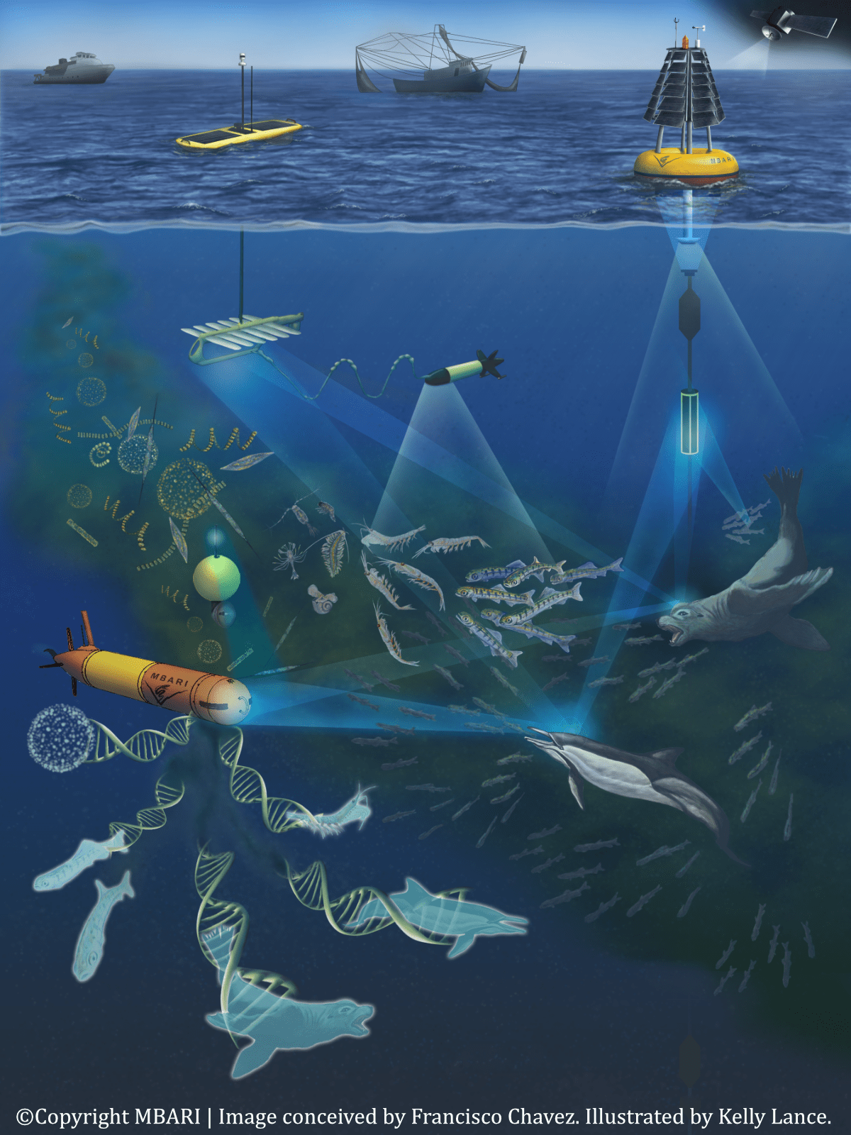 ©Copyright MBARI   Image conceived by Francisco Chavez. Illustrated by Kelly Lance